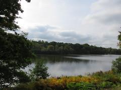 UK - Berkshire - Near Virginia Water - Windsor Great Park - Virginia Water (JulesFoto) Tags: uk england southbankramblers berkshire windsorgreatpark virginiawater lake