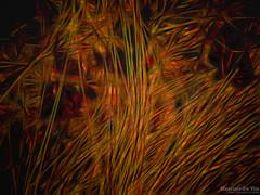 Fallen Leaves and Grass Blades (Maurizio Scotsman De Vita) Tags: mixedmedia leaves foglie abstract abstractions astrazioni puglianello plantsflowers astratto impressionistic impressionistico