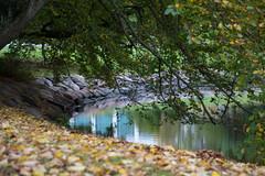 Reflection (Maria Eklind) Tags: hst kungsparken reflection spegling sweden park autumn europe trees malmoe hst malm skneln sverige se