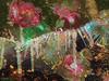 ~~ ornaments & icicles ~~ (xandram) Tags: christmastree ornaments icicles faery dreamscopetextures texturesmyown photoshop