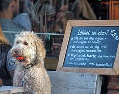 Amersfoort, Hond met zijn bal (Nik Morris (van Leiden)) Tags: hond bal ball dog amersfoort netherlands nederland olympusstylus1