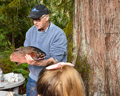 Salmon Hatchery at McLean's Mill (ausmc_1) Tags: tamronsp2470mmf28divcusd mcleansmill portalberni sawmill vancouverisland d800 hatchery salmon canada school britishcolumbia cherrycreek kitsuksiscreek