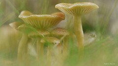 Champignons, Mushroom (fred'eau) Tags: champignons mushroom jardin spider vert macro 50mm