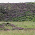 Bruyères dans les Quiraings,  péninsule de Trotternish, île de Skye, Ross and Cromarty, Highland, Ecosse, Royaume-Uni thumbnail