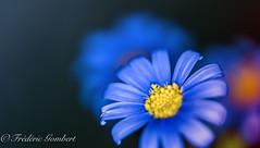 Blue emergence