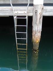 Darling Harbour - high tide (Poytr) Tags: darlingharbour sydneyaustralia sydney water ladder timber fishing wharf hightide syncarpiaglomulifera syncarpia myrtaceae pylon