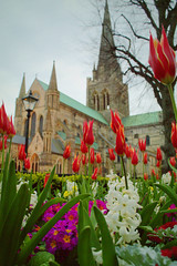 Cathedral blooms in springtime (Caroline Oades) Tags: 115366 cathedral chichester westsussex england flowers springtime tulips hyacinth red 2442016