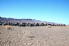 11-5-16 Roveys Needle Ride-101 (Cwrazydog) Tags: arizona trailriding