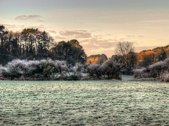 Frosted (diminji (Chris)) Tags: frost nature trees frosted winter autumn hdr hdrtoning fields hedgerows hedges cornwall cornish