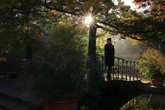 IMG_8796_Fotor01 (Ela's Zeichnungen und Fotografie) Tags: hannover stadtpark landschaft natur herbst baum laub blätter brücke person frau sonne sonnenlicht sonnenstrahlen lichtefekt blumentöpfe treppe teich wasser