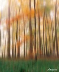 Blurred (Toucaly) Tags: ifttt 500px wood automne autumn balade brouillard directional directionnel europe fall fog forest landscape fort france la neuville en hez nature discovery et dcouverte oise paysage forestier picardie ride sousbois undergrowth underwood