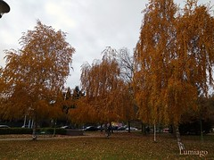 Los rboles son los protagonistas principales del Otoo (Lumiago) Tags: hojas naranja orange burgos castillaylen espaa spain flickr estrellas flickrestrellas
