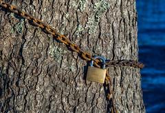 The lock (Henrik Axelsson) Tags: bergslagen bl foliage forest hgberget knutsbotjrn lake landsbygd ludvika ls sj skog tree trd vatten water dalarnasln sverige se