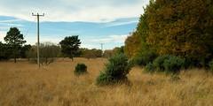 Strensall Common York Nov 2016 - 2655 (mattcornock) Tags: autumn ywt yorkshirewildlifetrust york strensall