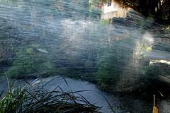 Acqua (dona(bluesea)) Tags: acqua water ortobotanico botanicalgarden palermo sicilia italia