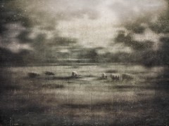 All Of Our Journeys Lead To Home 11 (michelle-robinson.com) Tags: michellerobinson michmutters fineartphotography monochrome blackandwhitephotography 4tografie flickrelite artphotography atmospheric photomanipulation photography adelaide southaustralia australia nature landscape editedonipadair2