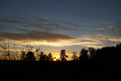 Before The Sun Rose (mohsenil@ymail.com1) Tags: clouds sunrise daybreak firstlight dawn trees pines treeline