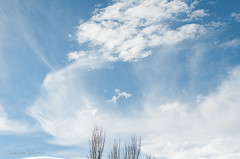 163.365 respirar...... (Josune Martin) Tags: amplitud cielo color medioambiente naturaleza rbol
