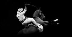 Odilo Gonalves (Eduardo Amorim) Tags: gacho gachos gaucho gauchos cavalos caballos horses chevaux cavalli pferde caballo horse cheval cavallo pferd crioulo criollo crioulos criollos cavalocrioulo cavaloscrioulos caballocriollo caballoscriollos pampa campanha fronteira pelotas riograndedosul brsil brasil sudamrica sdamerika suramrica amricadosul southamerica amriquedusud americameridionale amricadelsur americadelsud cavalo         hst hest hevonen  brazil eduardoamorim gineteada jineteada