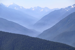 Hurricane Ridge, Olympic National Park (sturner404) Tags: hurricaneridge olympicnationalpark washington summer 2016 mountains mist peaks valleys trees landscape