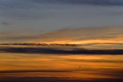 MORNING HAS BROKEN (DESPITE STRAIGHT LINES) Tags: bird birds seagulls gulls fly flight wings wingbeats silhouette botanybay botanybaybroadstairs sunriseoverbotanybay botanybaykent botanybayinbroadstairs bay seaside sunrise thegoldenhour goldenhour magichour themagichour lowlightphotography broadstairs kent england coast coastline coastal tide tidal water sea sunlight nikon d800 nikond800 nikkor200500mm nikon200500mm nikongp1 manfrotto tripod paulwilliams despitestraightlines flickr gettyimages yahooprojectweather morning getty gettyimagesesp despitestraightlinesatgettyimages