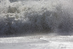 161024-1127-Katama (Sterne Slaven) Tags: massachusetts plymouth marblehead capecod marthasvineyard edgartown oakbluffs vineyardhaven salem lynn turkeyvulture seawall tide waves seaweed historic october sailboats lighthouse hightide lowtide wildturkeys offseason canoe sunset fisherman seagulls gulls nakedwoman lensbaby katamabeach lucyvincentbeach gayhead chappaquiddick lagoon bramble whalingchurch seacreature cemetery plimothplantation roosters spiderwebs oldburialhill pilgrims clamdiggers sanddunes barnstable taunton sexynude sunhalo fullmoon sterneslaven water fountain 1600s wampanoag mayflower pelt harbor chathamma seals ocean atlanticocean coastal newengland actors