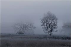 Mistig en koud (HP019828) (Hetwie) Tags: ijs ice strabrechtseheide frozen frost natuur nature rijp ochtend kou nachtvorst koud zonsopkomst heather heide sunrise strabrecht vorst lierop noordbrabant nederland