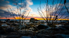 Sunset in northern Sweden (ErikN86) Tags: örnsköldsvik gvorrskär sony sonydslr sonya77ii sunset water tree ocean clouds sky rocks nature landscape