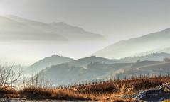 vignes embrumées 🍷 Vineyard in the mist (www.nathalie-chatelain-images.ch) Tags: valais sierre salquenen vignes vineyard brume mist coteaux
