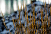 Coming Alive. (Omygodtom) Tags: existinglight abstract snow cold natural nature nikkor diamond star digital nikon d7100 senery setting scene scenic water ice tags outdoors