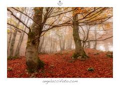 Magie d'autunno (Simone Angelucci) Tags: foglie autunno rosso arancione faggio filettino faggeta montisimbruini parcoregionale campostaffi sibruini naturanebbiaalberi
