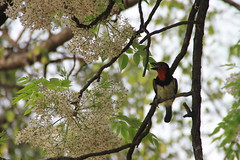 Maun (www.JnyAroundTheWorld.com - Pictures & Travels) Tags: sunset bird nature river landscape botswana oiseaux okavango birdlife maun jny crocodilecamp