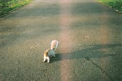 Ehy Squirrel! (Analip) Tags: camera color london fall film last analog 35mm squirrel hill 2013 superheadz