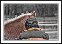 Sarah and ... (gill4kleuren - 12 ml views) Tags: life horse me sarah fun outside happy running gill saar paard haflinger