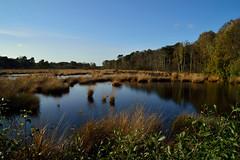Haaksbergerveen (l-vandervegt) Tags: holland nature netherlands landscape nederland natuur twente overijssel landschap niederlande 2014 haaksbergen haaksbergerveen