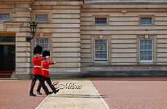 Royal Guard (Milene Emidio) Tags: uk greatbritain london europe guard royal palace buckingham
