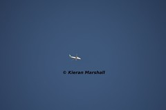 EI-DVI, O/H Malahide, 12/10/14 (hurricanemk2c) Tags: plane flying nikon aviation 300mm planes airbus aerlingus a320 2014 a320200 d3200 a320214 eidvi groundtoairphotograph overheadmalahide