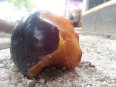 bitten (Rodrigo Alceu Dispor) Tags: city macro fruit plum crawling