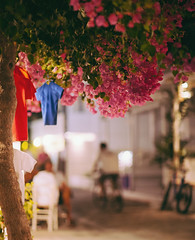 At the heart of the Cyclades (Sator Arepo) Tags: flowers tree bicycle bar canon town mediterranean bokeh terrace blossom