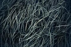 #7946 (UBU ) Tags: blues blunotte blunero blupolvere bluacqua blutristezza unamusicaintesta landscapeinblues bluubu luciombreepiccolicristalli ubu