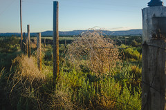 Tumbleweed/Barbed Wire (zjasonqian) Tags: new fence mexico wire desert barbed tumbleweed zuni blackrock