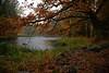 Gysinge Autumn (lortopalt) Tags: autumn höst vackra löv autumnleaf höstfärger höstlöv