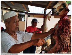 Aidil Adha Qurban/Aqiqah (sam4605) Tags: raya kambing korban adha aidil aqiqah qurban negerisembilan biribiri juasseh kampungterusan