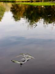 autumn minimalism (Darek Drapala) Tags: park autumn light reflection nature water leaves lumix leaf panasonic reflects panasonicg5