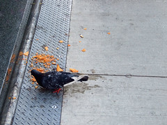 "Pigeon's diet of Doritos • <a style=""font-size:0.8em;"" href=""http://www.flickr.com/photos/34843984@N07/15540005595/"" target=""_blank"">View on Flickr</a>"