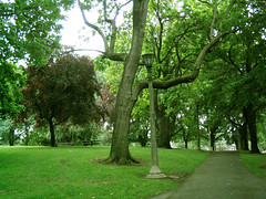 """Old green trees & Lamppost in Portland park • <a style=""""font-size:0.8em;"""" href=""""http://www.flickr.com/photos/34843984@N07/15546314812/"""" target=""""_blank"""">View on Flickr</a>"""