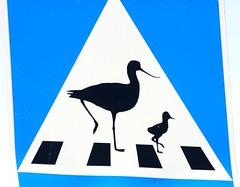 cross over (brandsvig) Tags: birds june canon skne sweden roadsign sverige skanr falsterbo 2014 vgmrke avocets nset sigma70300 canon40d skrflckor