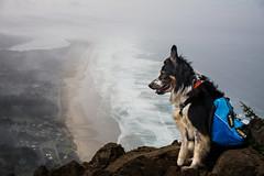 Neakahnie mountain, Oregon. (Justin Knott) Tags: dog mountain oregon neahkahnie