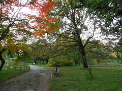 DSCN2073 (romir59) Tags: park tree green nature jardin natura toamna botanica bucuresti redtree jardinbotanique copaci gradinabotanica bucharestbotanicalgarden grnland