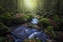 Gentle Treasure (@hipydeus) Tags: light mist fog fairytale creek bayern bavaria waterfall moss rocks nebel bach moos mrchen